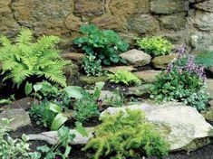 rock garden :: rockery gives spring interest to dull shady corner - Garden Presence Rockery Garden, Rock Garden Plants, Shade Garden, Fence Plants, Fence Garden, Garden Pond, Herb Garden, Vegetable Garden, Rock Garden Design