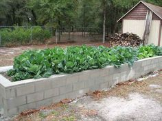 Concrete blocks for a raised bed - looks surprisingly nice! Cheap and will last....