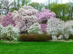 winterthur gardens | Winterthur Museum, Garden & Library Photo: Explosion of color - trees ...