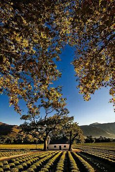 Scenic Home Old farm house in the Cape Wine lands at Franschoek in the Western Cape of South Africa also home to La Clé des Montagnes - 4 luxurious villas on a working wine farm Wonderful Places, Beautiful Places, Beautiful Scenery, Namibia, Old Farm Houses, Out Of Africa, In Vino Veritas, All Nature, Africa Travel