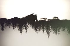 Minor Trees by Callum Baker, via 500px