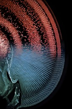 Eye of a Damselfly  Image by Igor Siwanowicz, Max Planck Institute for Neurobiology, Munich, Germany.