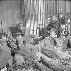 Disconsolate German prisoners locked in the lion's cage at Antwerp zoo, 5 September 1944.