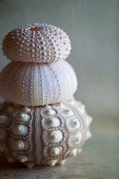 Three urchins....fine art sea shells photograph by Lauren Dinneweth によく似た商品を Etsy で探す