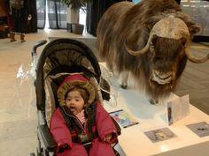 :p Cow, Pictures, Animals, Animais, Animales, Photos, Animaux, Photo Illustration, Animal