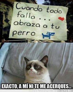 jajajajajaja este gato... es tan gruñon, me mata de risa @amordgatos @Yamreij Carlos