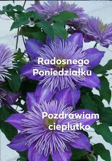 Plants, Blog, Good Morning, Pictures, Polish, Flora, Blogging, Plant, Planting