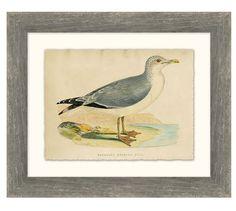 Herring Gull Wall Art | Pottery Barn