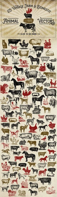 Vintage Farm Animal Vectors by Eclectic Anthology on Creative Market