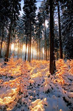 ~~Tranquil Minds ~ snowy pine forest, Vogtland, Saxony, Germany by =r3novatio~~
