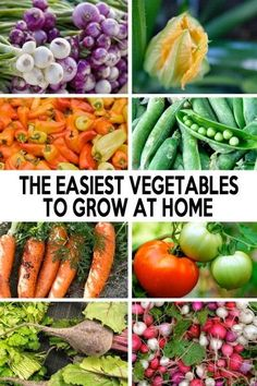 The easiest vegetables to grow at home #vegetable_gardening | Organic Gardening