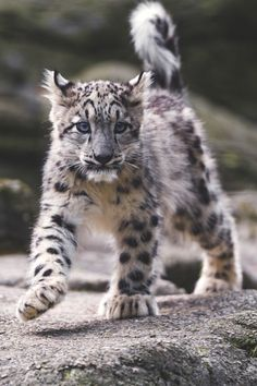 lsleofskye: Cute and walking!