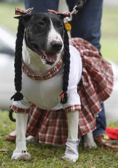 Dog Clothes The greatest fashion trend going to the particular runways is designer small dog dresses for our canine friends fashion. Dog Halloween Costumes, Pet Costumes, Costume Ideas, Pet Fashion, Animal Fashion, Fashion Clothes, Dressed Up Dogs, Cute Dog Clothes, Puppies And Kitties