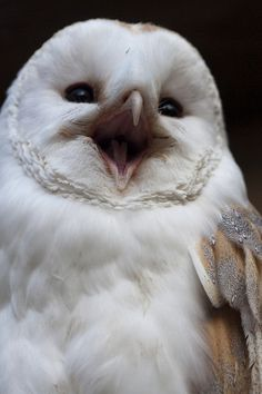 Shuttleworth Birds of Animals And Pets, Baby Animals, Funny Animals, Cute Animals, Cute Birds, Cute Owl, Beautiful Owl, Animals Beautiful, Owl Pictures