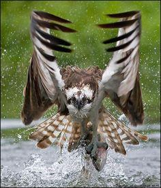 animal de poder: águia (de onde repinei dizia q é uma coruja, mas nêgo viaja)