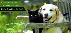 How To Increase #Pets Life? Take A Look At These #Effective Ways To Increase Your Pet's #Quality Of #Life -