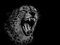 Photographer Ed Hetherington: black and white animal portraits This series of pictures by Ed Hetherington ...