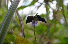 Mariposa hasta el infinito