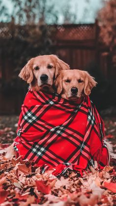 - Best of Wallpapers for Andriod and ios Cute Dogs And Puppies, Baby Dogs, I Love Dogs, Doggies, Cute Funny Animals, Cute Baby Animals, Animals And Pets, Cute Dog Wallpaper, Animal Wallpaper