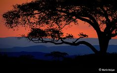 Bushveld Sunset,Nelspruit, Mpumalanga, South Africa (by Martin_Heigan)