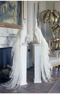 White Peacock, Peacock Colors, Peacock Art, Peacock Feathers, Peacock Room Decor, Taxidermy Decor, Taxidermy Fox, Taxidermy Display, Chateau Versailles