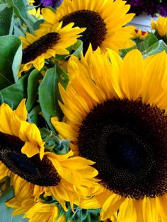Big, bright sunflowers light up the stalls at Seattle's famous Pike Place Market.
