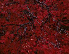 Misha de Ridder - Contemporary Landscape Photography
