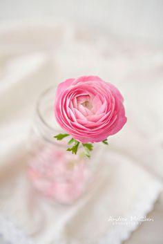 Beautiful Flowers Wallpapers, Beautiful Rose Flowers, Beautiful Flower Arrangements, Floral Arrangements, Flower Backgrounds, Flower Wallpaper, Shabby Flowers, Pink Petals, Belle Photo
