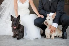 Scottish terriers Daisy and Lily feat. Belle's wedding