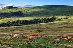 Vacances champêtres à la ferme : 15idées de séjours en Auvergne et dans le Puy de Dôme - Linternaute