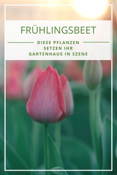Charmant Blumenbeet Im Frühling: So Wird Ihr Garten Ein Hingucker