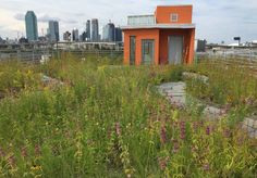 Newtown Creek Wildflower Roof, Greenpoint, Brooklyn, sustainable landscaping, green roof, green design, sustainable design, green building, park, public space, urban design #greenroof