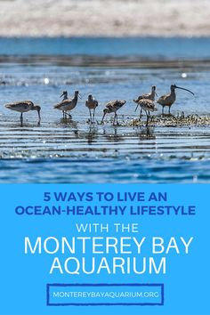 Monterey Bay Aquarium, California Travel, 5 Ways, Travel Destinations, Healthy Lifestyle, Ocean, Places To Travel, The Ocean, Healthy Living