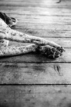 Zzzzzzzz... | Jillian | Flickr