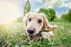 Spend less time worrying about your lawn and let your puppy play as much as they want with synthetic grass!
