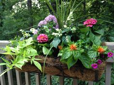 Get a garden view no matter where you live when you plant a window box like this!