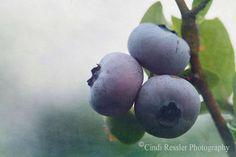 Blueberries 1 Fine Art Photography Food by CindiRessler on Etsy