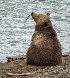 "Bear: ""I need to unwind. I can 'bear'-ly think straight today! Animals Of The World, Animals And Pets, Cute Animals, Bear Pictures, Animal Pictures, Wild Life, Photo Animaliere, Love Bear, Mundo Animal"