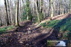Strecke Kloster Heisterbach - Königswinter Petersberg 02.02.2014 - man sieht es nicht unbedingt auf dem Bild, aber dieser Weg ist ein steiler steiniger Weg der den Gleichgewichtssinn stark in Anspruch nimmt!