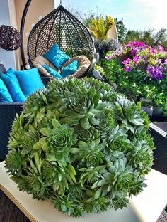 Biophilia, Welcome Home Nature Biophilic Architecture, Modern Architecture, Outdoor Living Rooms, Small Waterfall, Open Window, Small Space Living, Cacti And Succulents, Natural World, Natural Materials