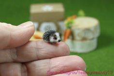 OOAK Dollhouse Miniature Pet Hedgehog Handcrafted Artist Made Animal 1:12 #Handmade-looks very realistic! Louise Glass