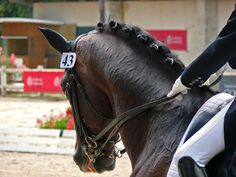 Dressage horses are the ballerinas of equine sport; While most horses are capable of competing at the lower… Hunter Course, Dressage Horses, Gifts For Horse Lovers, Show Jumping, Horse Barns, Show Horses, Horseback Riding, Equestrian, Competition