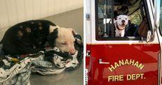 Jake, le chien rescapé des flammes devenu pompier