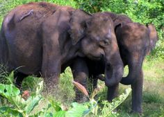 WHAT THE ANIMALS IN YALA PARK, SRI LANKA TAUGHT ME