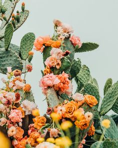 Spring Aesthetic, Nature Aesthetic, Flower Aesthetic, Desert Aesthetic, Plant Aesthetic, Aesthetic Collage, Red Aesthetic, Aesthetic Backgrounds, Aesthetic Iphone Wallpaper