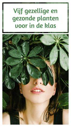 Zuiverende planten zorgen ervoor dat onfrisse geuren minder worden en dat er meer zuurstof in de klas komt. Genoeg redenen om een paar mooie groene verfrissers te kopen voor in je klaslokaal. Een top vijf van luchtzuiverende planten op een rij