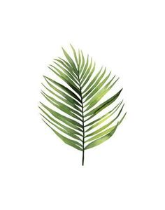 size: Giclee Print: Palm Leaf I by Ann Solo : This exceptional art print was made using a sophisticated giclée printing process, which deliver pure, rich color and remarkable detail. Plant Painting, Plant Art, Leaf Prints, Wall Prints, Leaf Printables, Framed Artwork, Wall Art, Leaf Drawing, Painted Leaves
