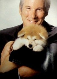 Richard Gere stars in Hachi, a film for those who love dogs and great storytelling. The movie hit DVD March and we have an exclusive online premiere -- the first six minutes -- of Gere's latest charm-fest. Animals Of The World, Animals And Pets, Cute Animals, Richard Gere, Dog Quotes, Animal Quotes, A Dog's Tale, Celebrity Dogs, Akita Dog