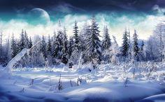 karlı çam ormanı