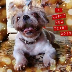 A Happy New Year! May 2013 bring love and peace to you all♡ #cameran #cameranapp